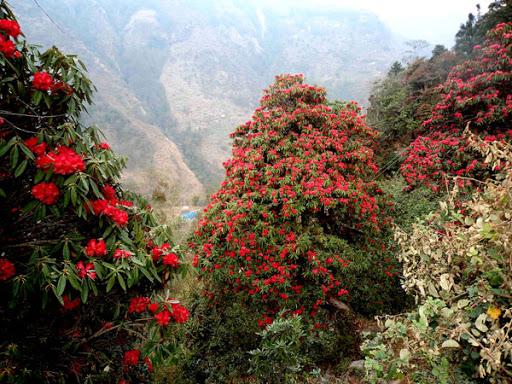 फूल टिपे ५ हजार जरिवाना