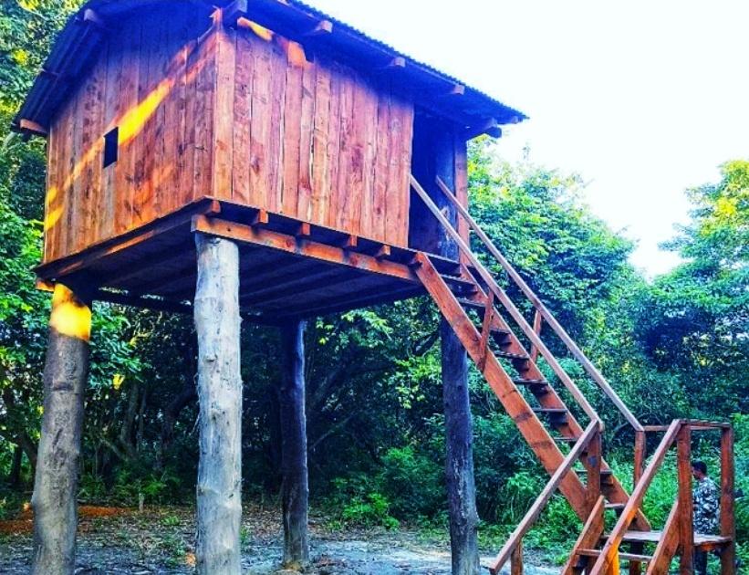 शुक्लाफाँटा राष्ट्रिय निकुञ्जमा चोरी शिकारी नियन्त्रण गर्न मचान निर्माण